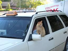 нелегальный таксист